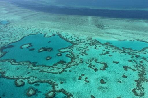 Australie: les coraux également menacés par les particules de charbon