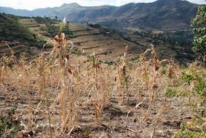 Sécheresse en Afrique australe: course contre la montre pour apporter une aide agricole à 23 millions de personnes