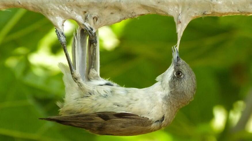 تقرير علمي جديد: 2.6 مليون طائر يقتل سنوياً في لبنان