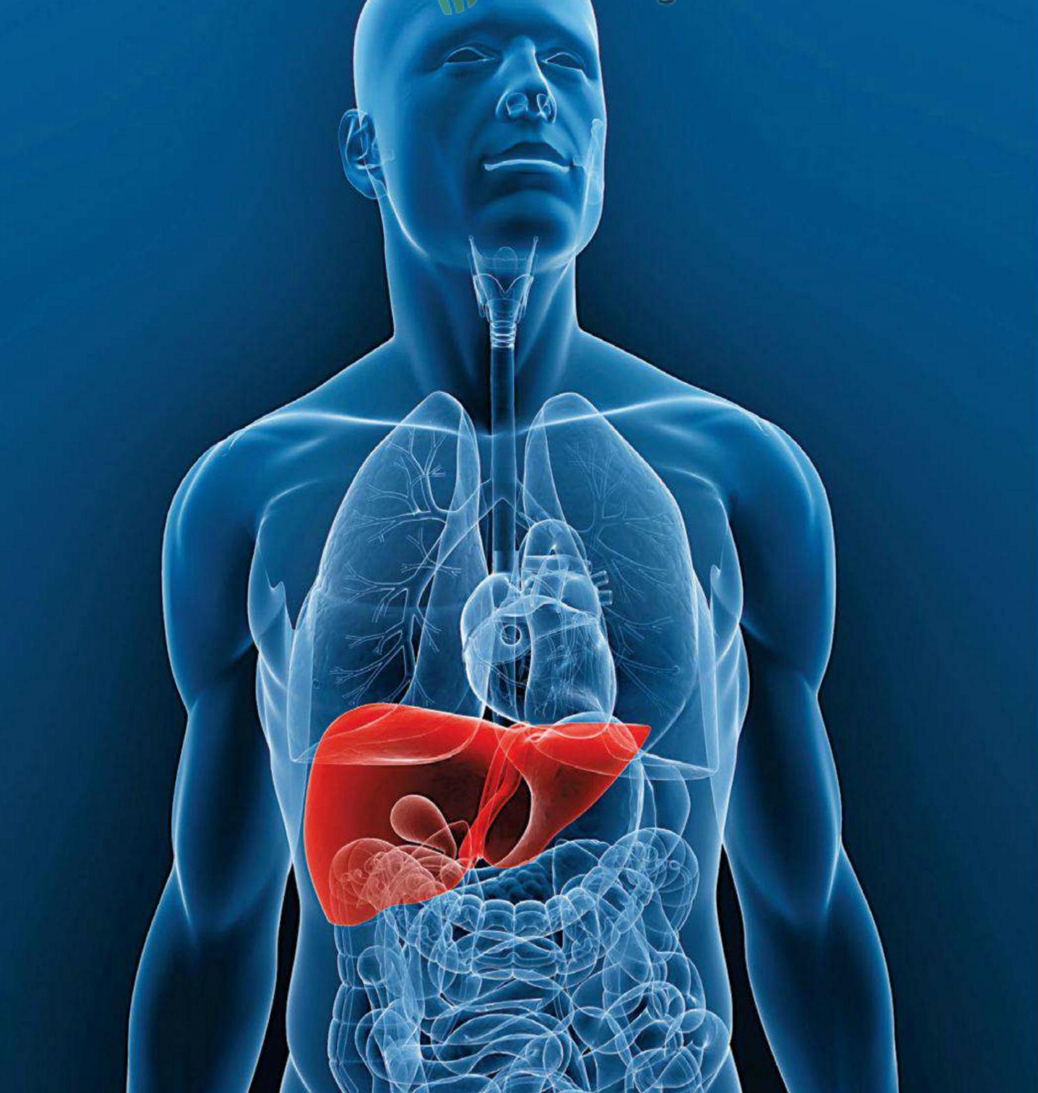 cuales son los enfermedades del hígado? - GreenArea.me