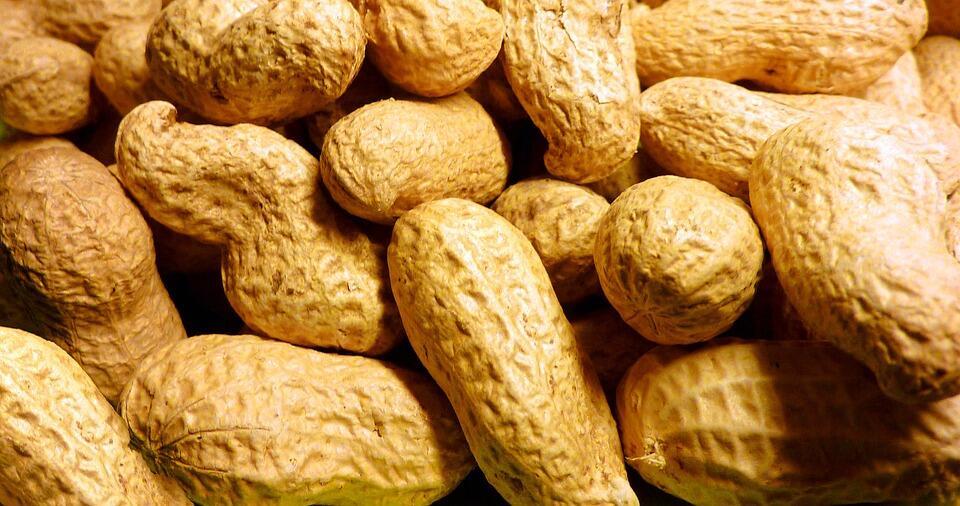 Consommer des cacahuètes très tôt permet une protection durable contre les allergies