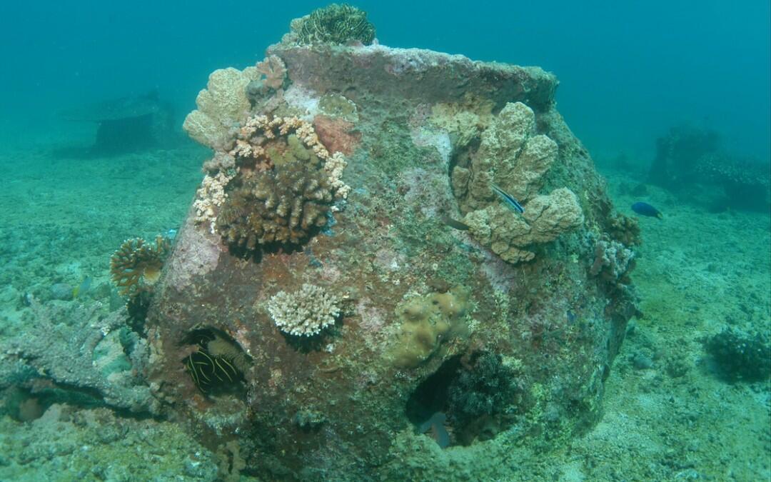 """كبسولة """"موندي"""" والشعاب المرجانية الخالدة… الدفن الأخضر متوفر!"""