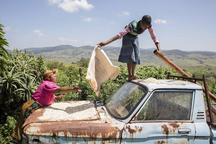 Malgré des perspectives mondiales de récolte favorables, la faim s'amplifie dans les zones de conflit, selon la FAO