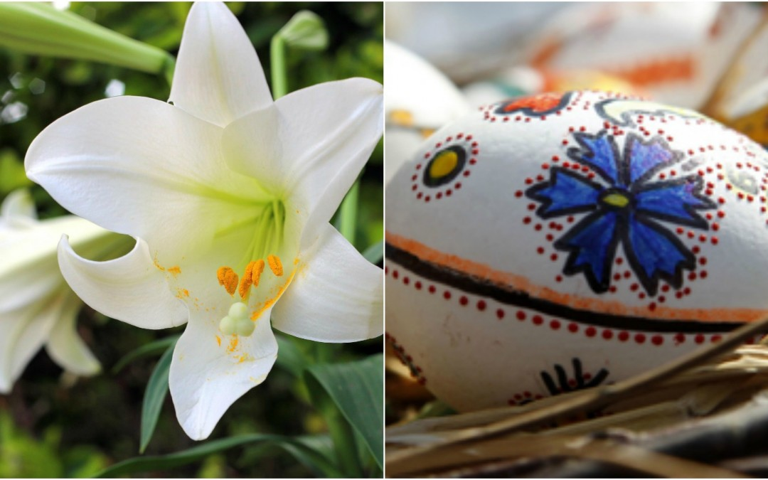What Is The Easter Lily Discover Its Beauty In This Season