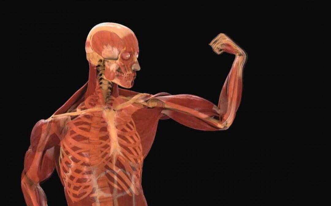Encuentran el límite máximo de la resistencia del cuerpo humano