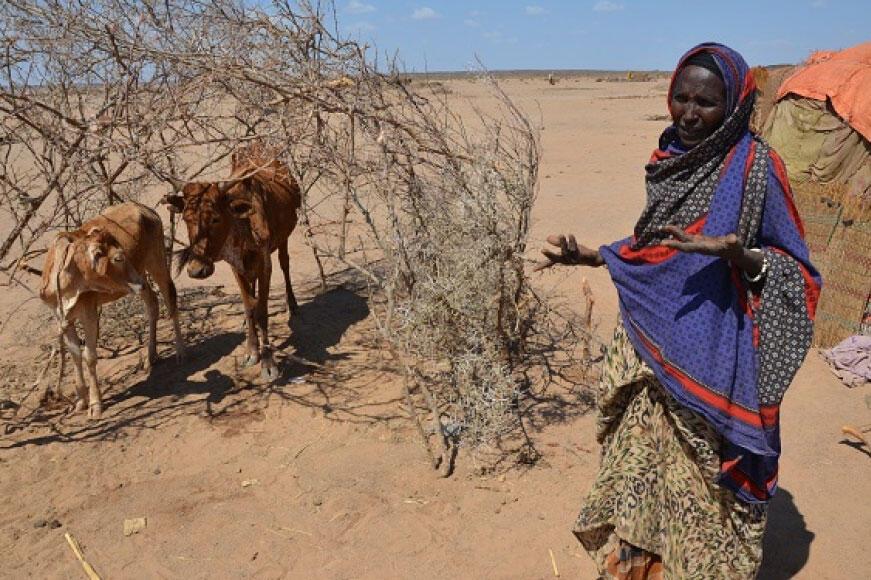 Ethiopie : les agriculteurs ont besoin d'une aide d'urgence pour nourrir le pays frappé par la sécheresse, selon la FAO