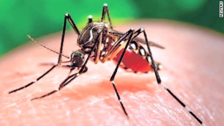 ¡No más picaduras! científicos de EU logran reducir el apetito de los mosquitos