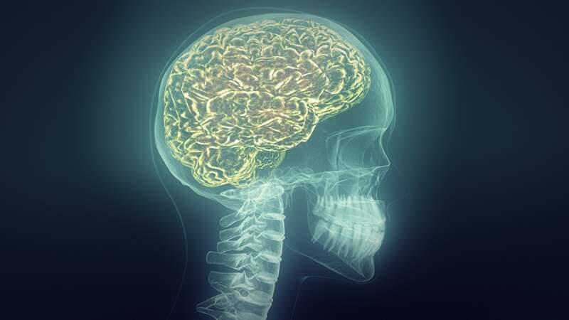 ¿Cómo llega la cocaína al cerebro?