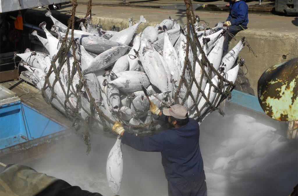 La FAO met en garde contre la surconsommation des poissons