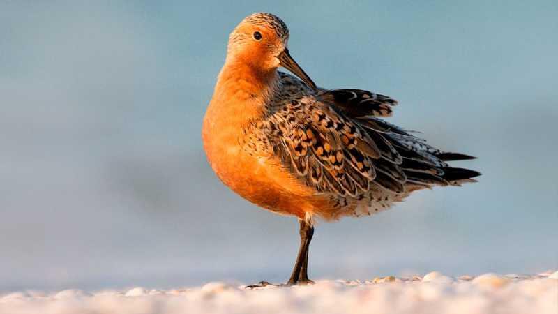 La tragedia del pájaro que reduce su tamaño y capacidad por el cambio climático