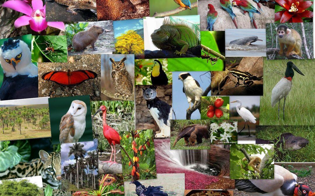 Pérdida de biodiversidad acelerada.