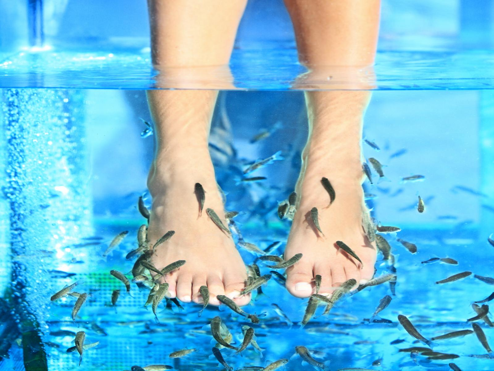 Man kills fishes with stinky feet during a fish spa pedicure for Fish spa pedicure