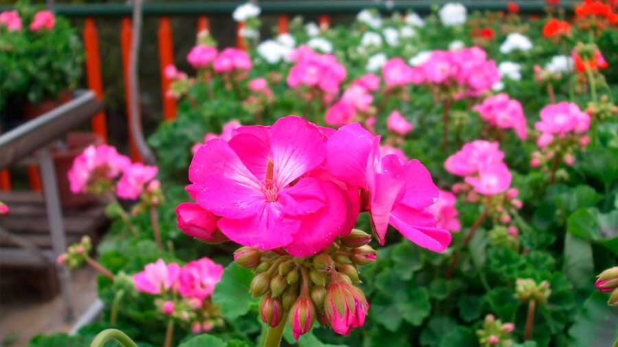 Las flores emiten menor aroma con el calentamiento global