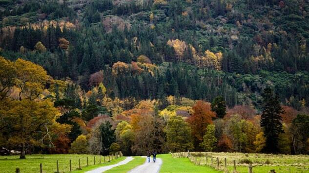 La gestión sostenible es la clave para garantizar la salud de los bosques en Europa