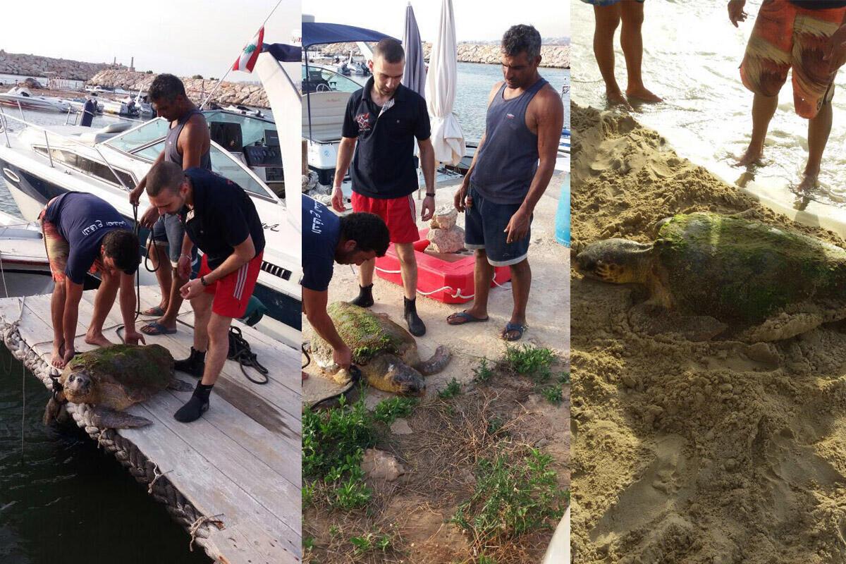 جهاز الدفاع المدني مركز الجية يحاول انقاذ السلحفاة بعد ان تركت تنازع على الشاطئ