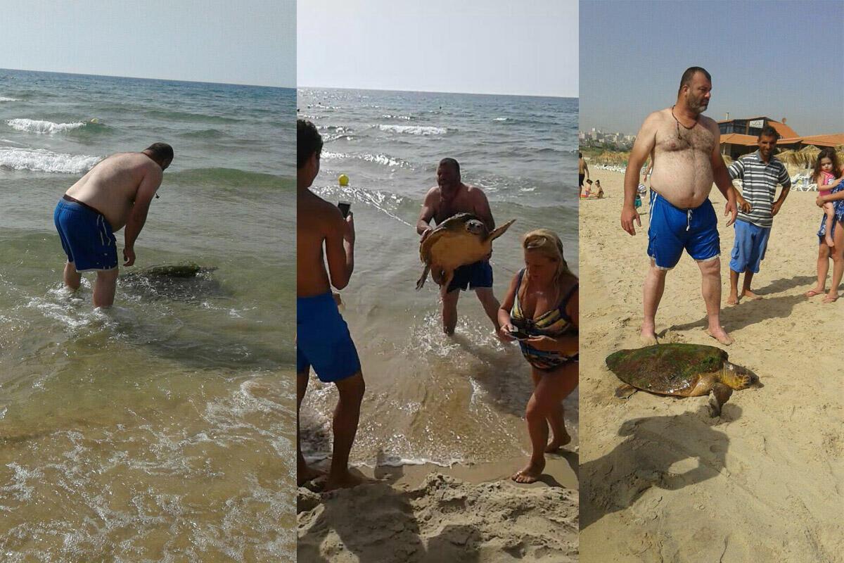 انتشال السلحفاة البحرية من الماء عند شاطئ الرميلة جنوب لبنان