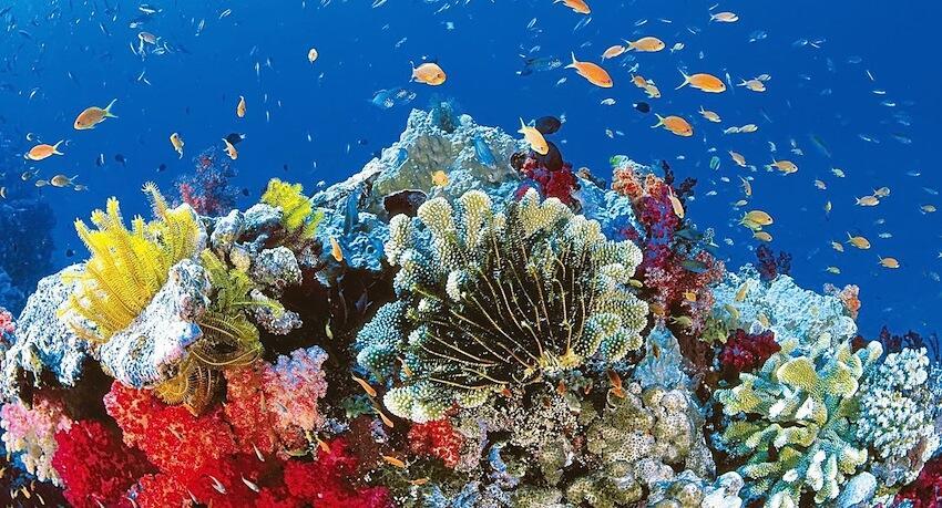 Declive de la Gran Barrera de Coral: ¿un paraíso perdido?