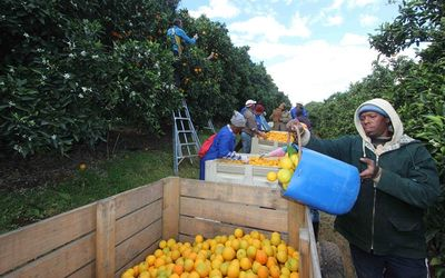 Fruit growers nurture ties with Italy