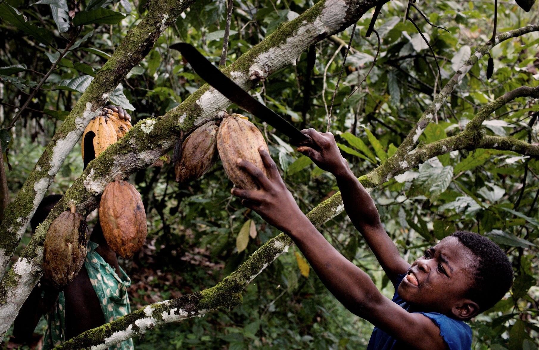 exportation plan cacao Tableau 4 recettes à l'exportation tirées du cacao, part en pourcentage du total des exportations par pays, 1971-1997 25 chapitre 4.