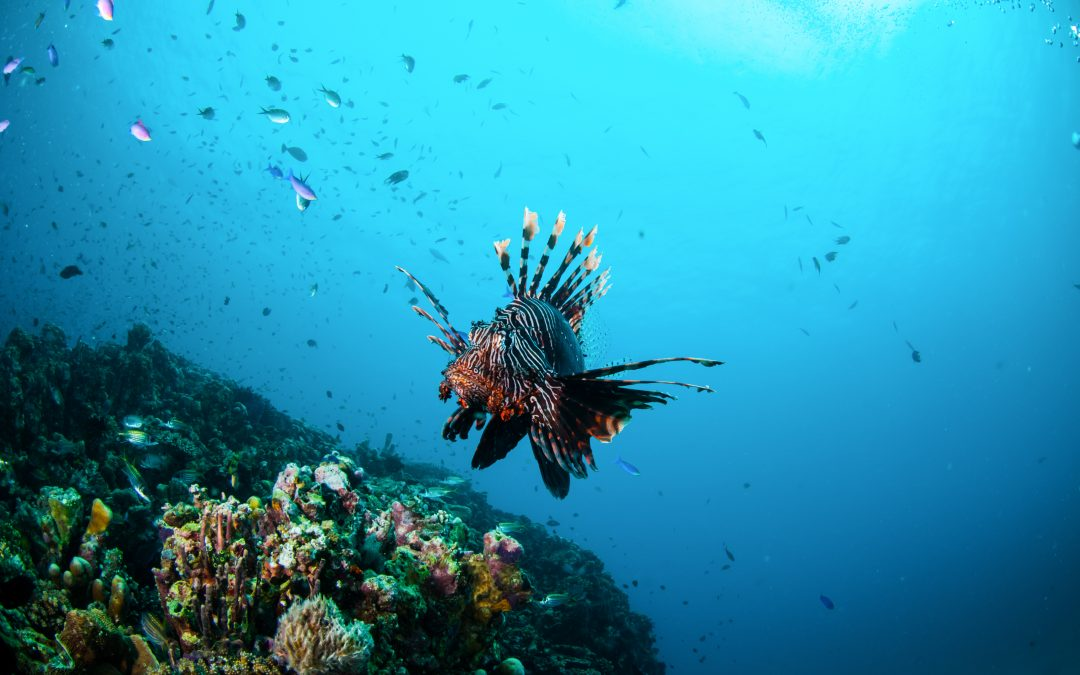 A poisonous fish invades the Mediterranean
