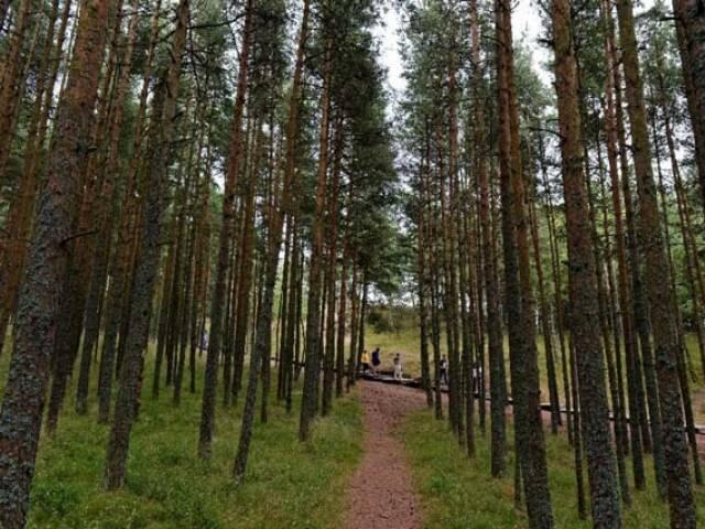 L'activité humaine donne un coup de pouce aux cycles de la nature