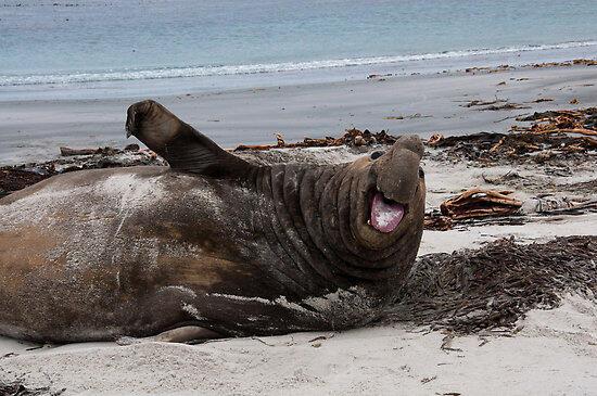 Les éléphants de mer aident à surveiller la fonte de l'Antarctique