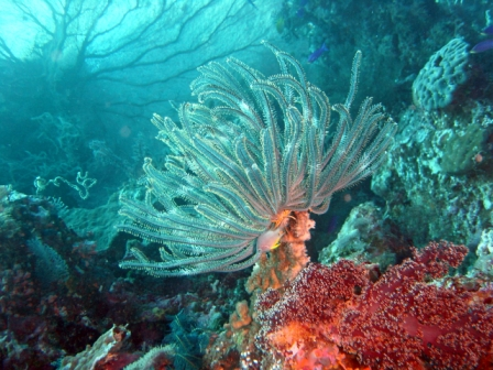 Underwater Sea Plants With Names