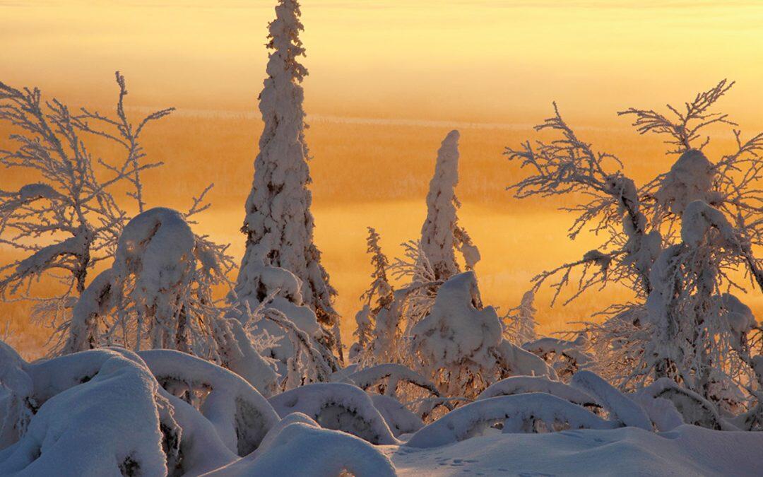¿Que plantas hay en el ártico?