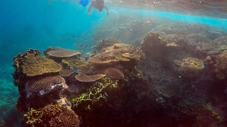Scientists confirm largest die-off of corals recorded
