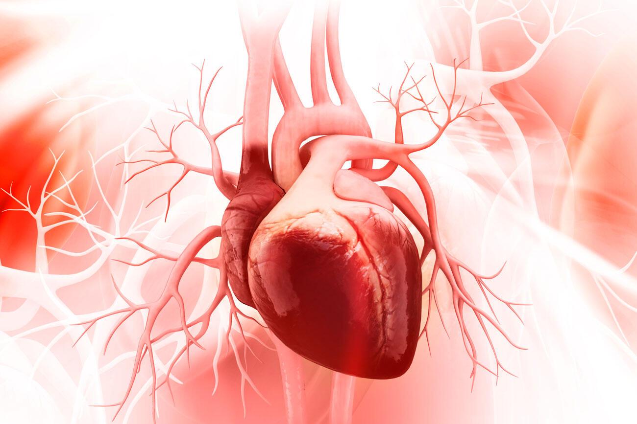 Investigadores chilenos descubren estructura celular clave para la reparación del corazón