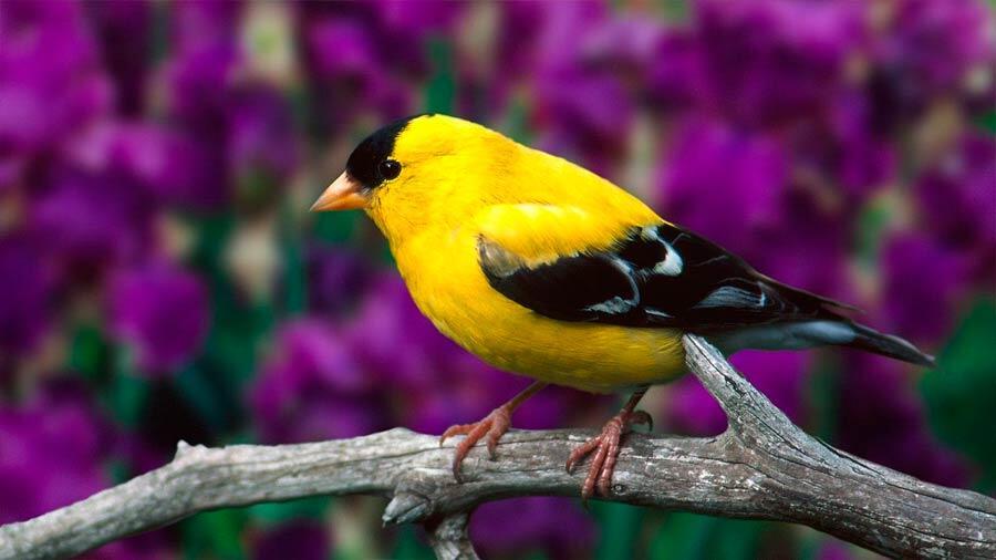 Plus d'oiseaux considérés comme menacés d'extinction