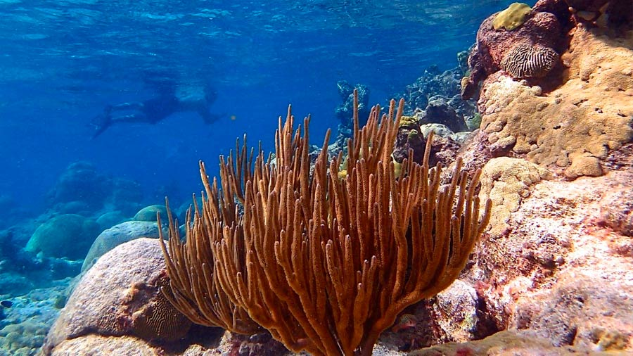 Le changement climatique ne peut être «fatal» pour tous les coraux