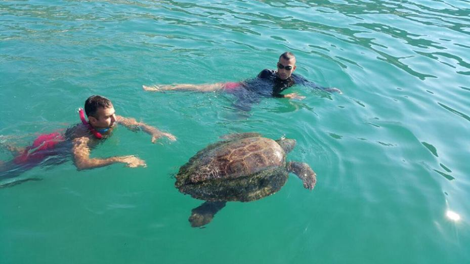 """""""Green Area international"""" and Lebanese Efforts Save """"Lucky"""" the Sea turtle"""