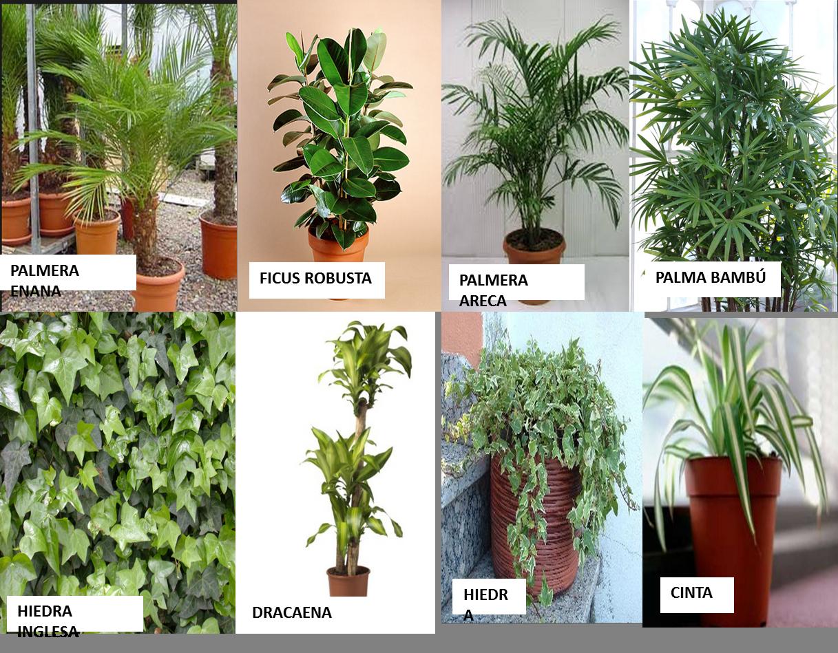 plantas que limpian nuestro aire contaminado faddi On plantas limpian aire
