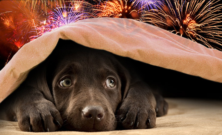 Pets and New Year's Eve festivities don't mix, say UAE animal-welfare advocates