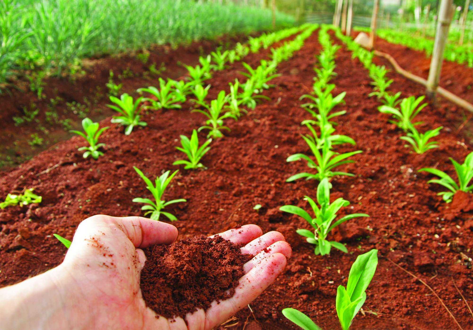 En el d a mundial de los suelos qu debemos hacer for 5 cuidados del suelo