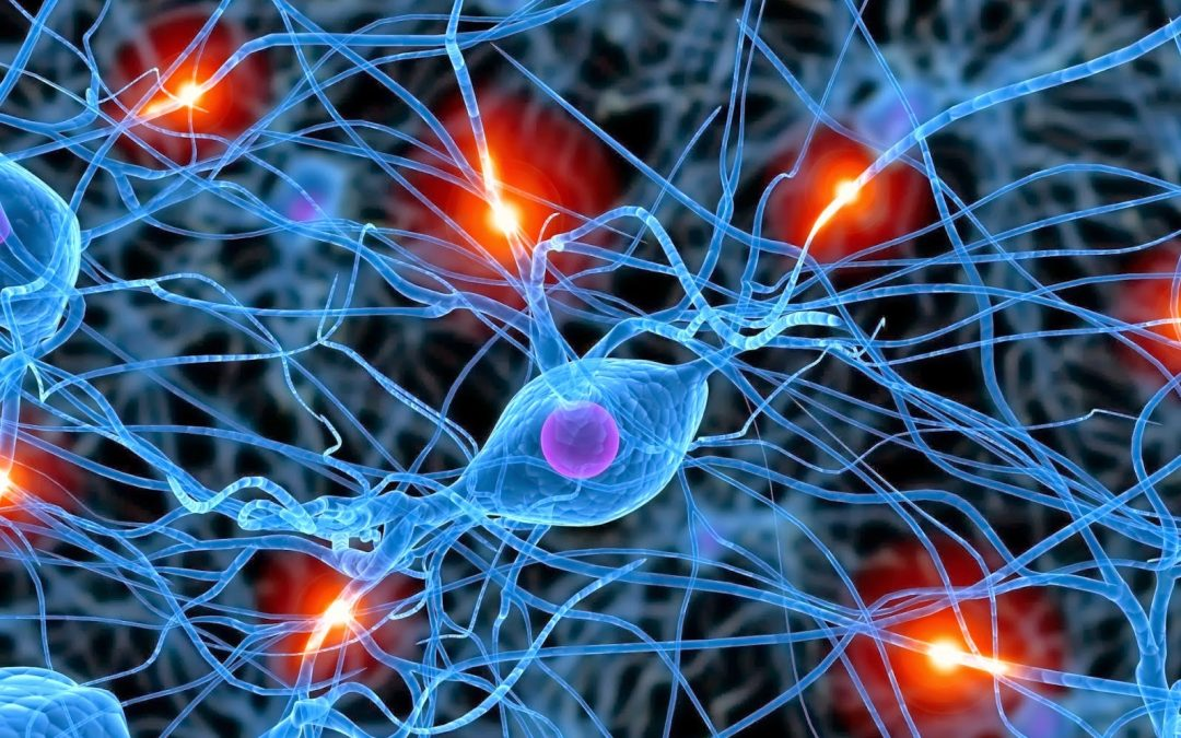 Identifican 'neuronas espejo' en ratas que se activan al observar el dolor experimentado por otros