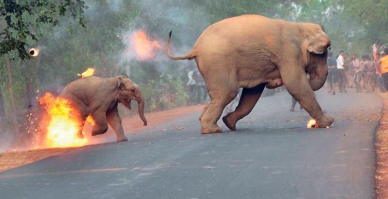 Una pequeña elefantes …¿Que dolor?