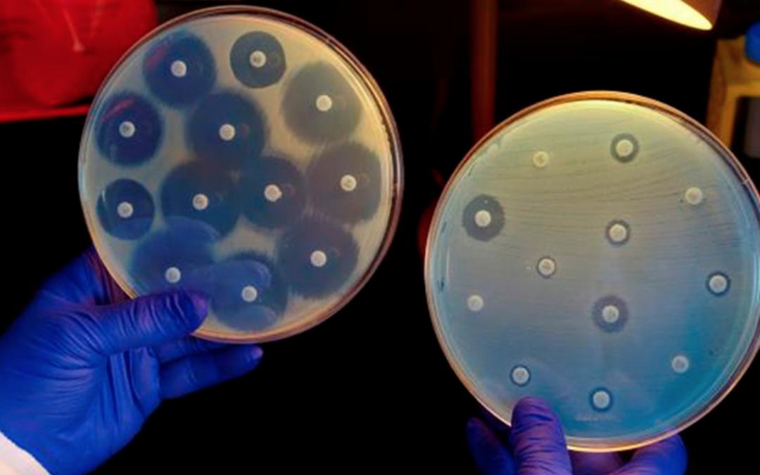 Ils ont découvert comment les bactéries deviennent résistantes aux antibiotiques