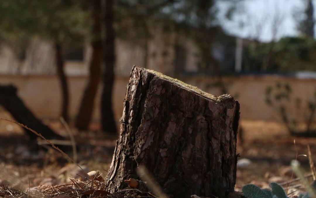 البرد في المغرب.. بحث عن خشب التدفئة  والسلطات تخشى استنزاف الموارد الغابوية