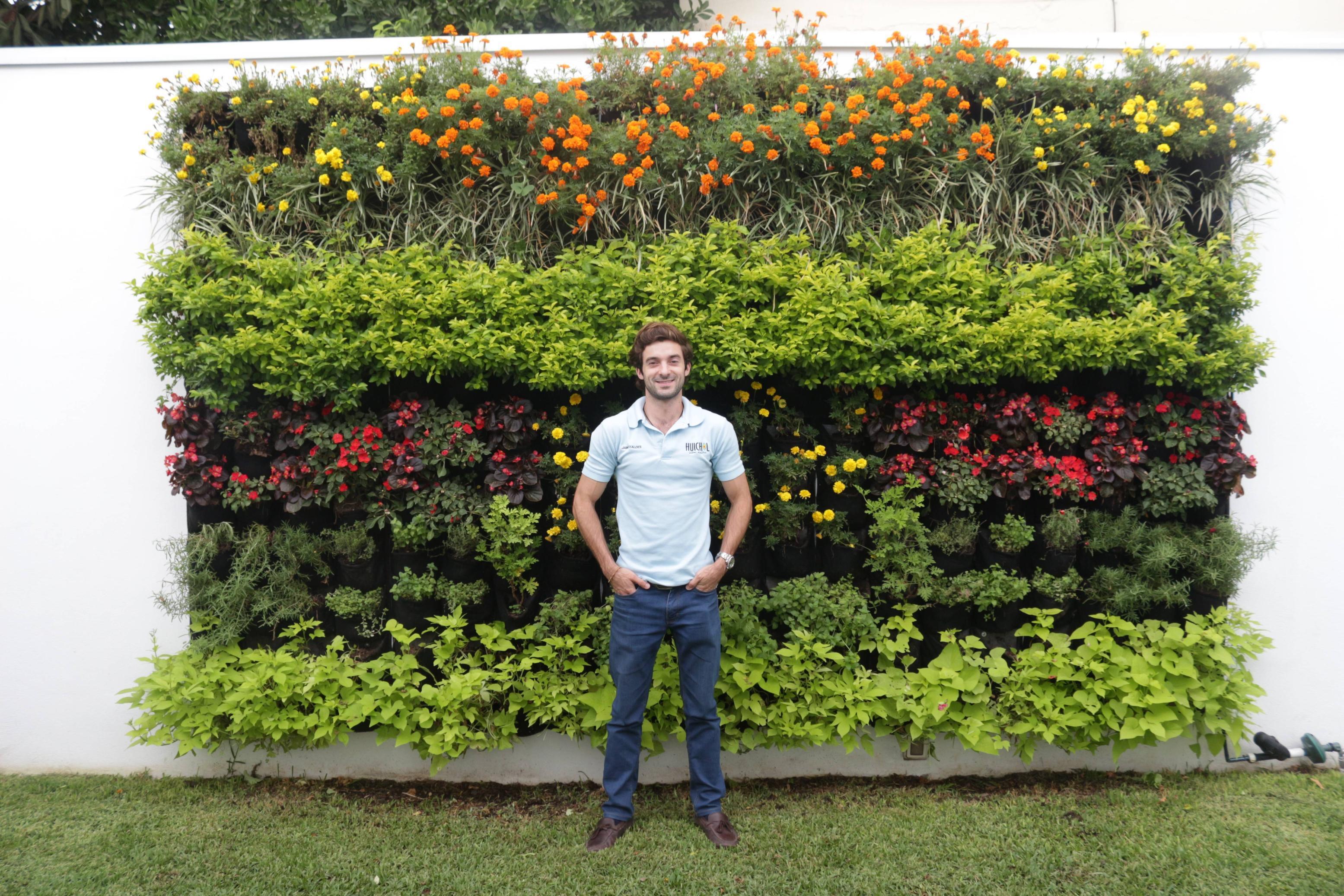 Para enfriar edificios en climas mediterr neos utilizan for Plantas utilizadas en jardines verticales