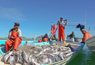 ندرة متزايدة من الغذاء البحري .. والسبب الإحترار المناخي