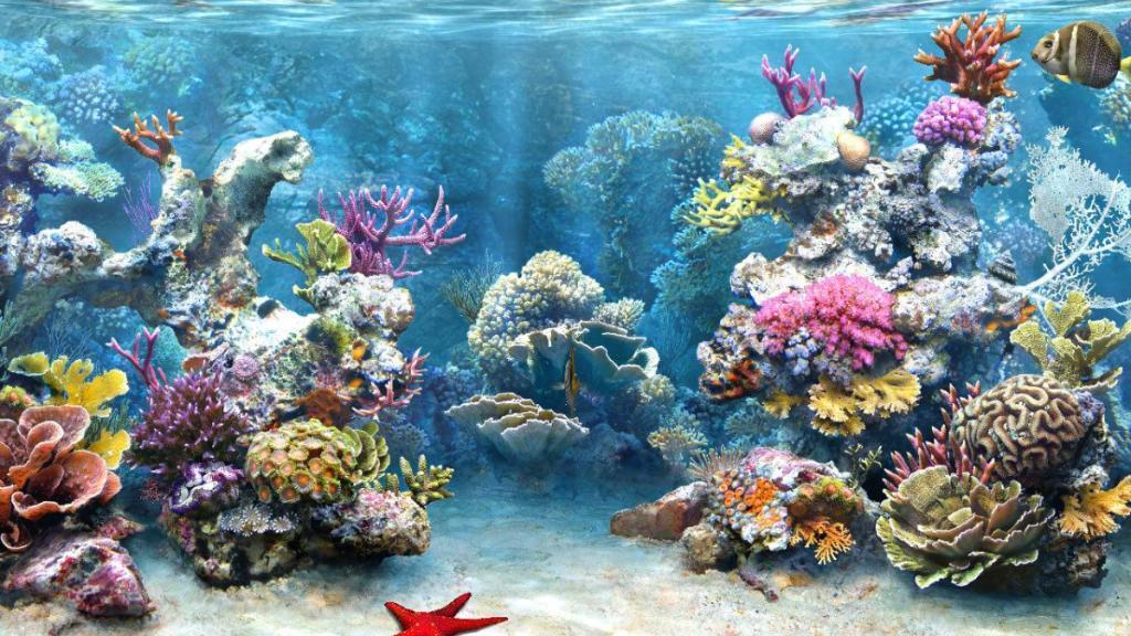 !  المرجان يتكيّف مع تغيرات المناخ
