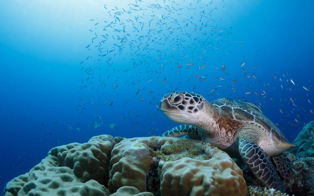 جمعية غرين ايريا الدولية دعت الى حماية النظام الايكولوجي البحري