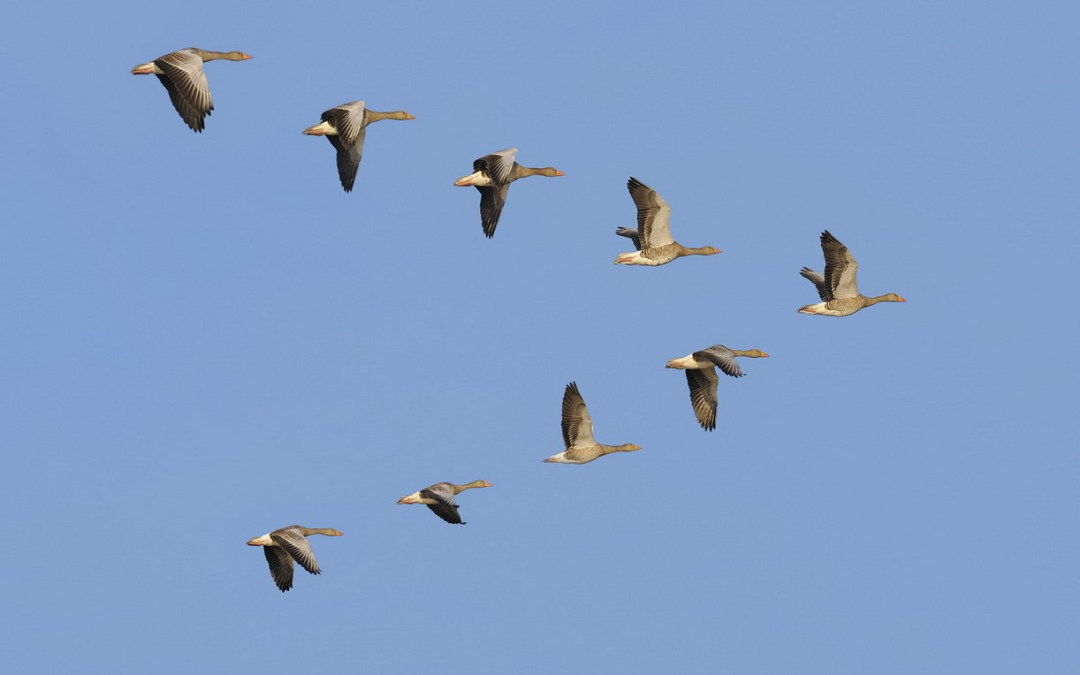 مذابح طالت الطيور المهاجرة والمستوطنة من شمال البلاد  الى جنوبها
