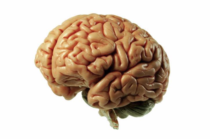 Investigadores descubren un vínculo crucial entre las células madre del cerebro y del intestino