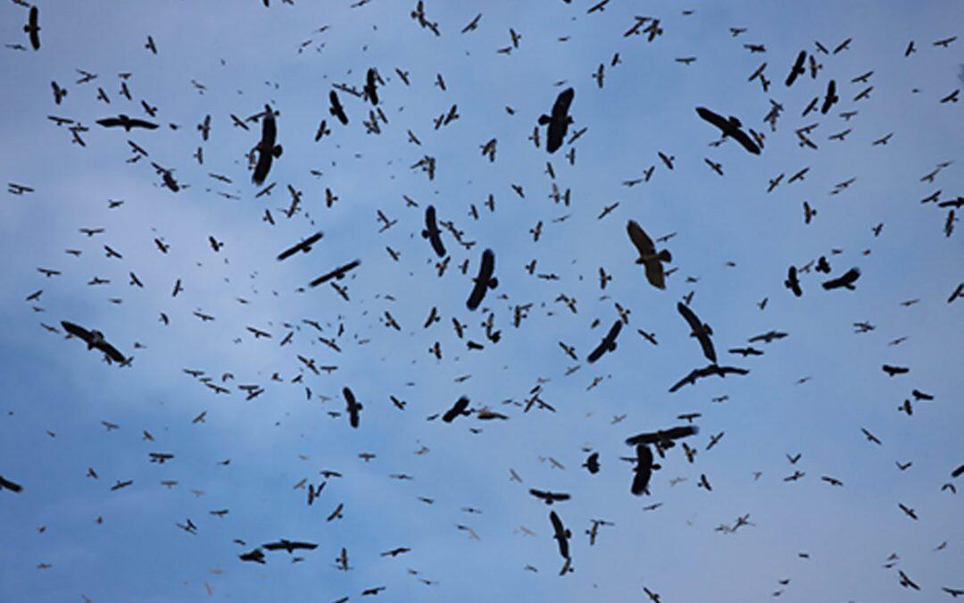 هل يؤمّن لبنان هجرة آمنة للطيور؟