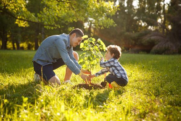 Plantar árboles para salvar el planeta.