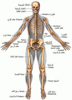 هل تعلم أن عند ولادة الإنسان يكون في جسمه 300 عظمة ويتراجع هذا العدد إلى 206 فى سن البلوغ