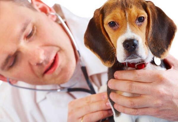 الكلاب تنقل الإنفلونزا !!